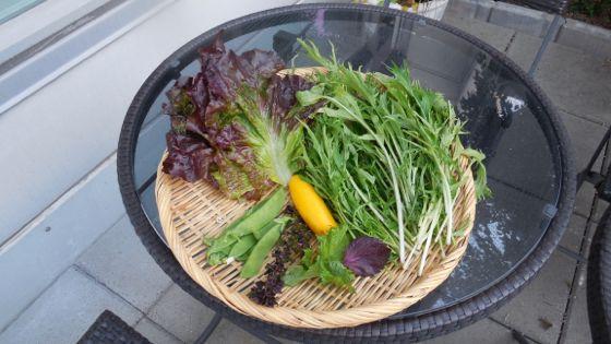 Fumikoさんの家庭菜園